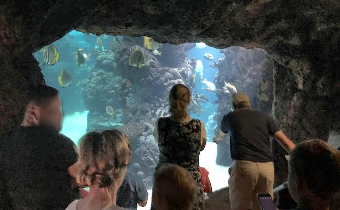 Aquarium im Burgers Zoo