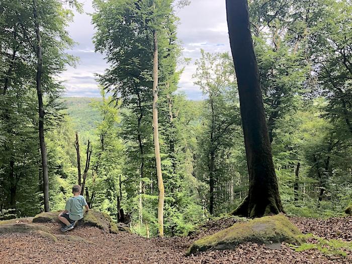 Wald Teufelsschlucht Eifel
