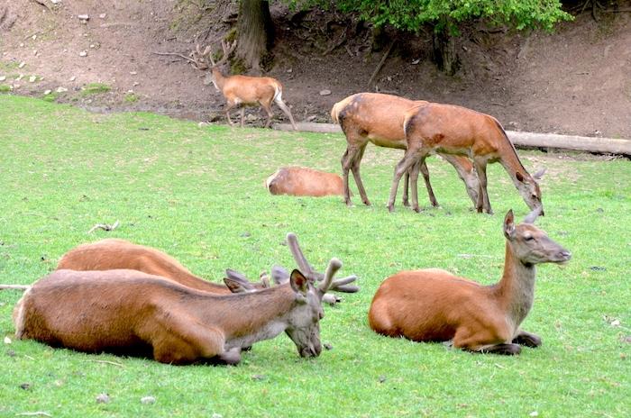 Wildtierpark Eifel
