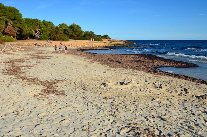 Herbstferien auf Mallorca – Sa Coma an der Ostküste
