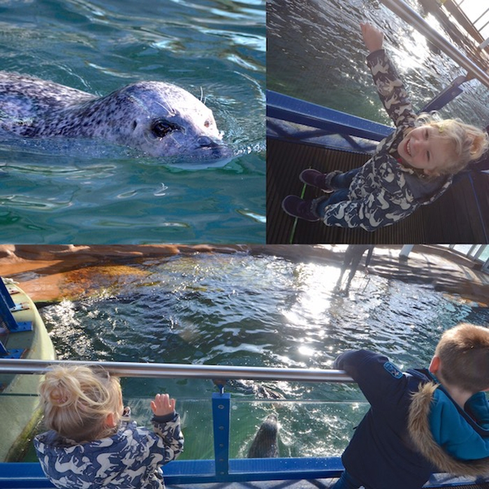 Seehunde mit Drohne füttern