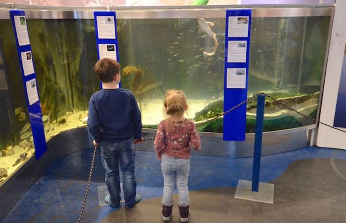 Aquarium im Besucherzentrum Wattenmeer