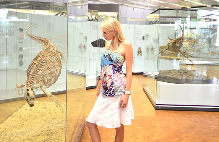 Dinosaurier Museum Stuttgart