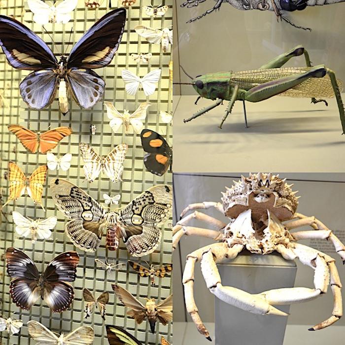 Insekten - Spinnen - Schmetterlinge
