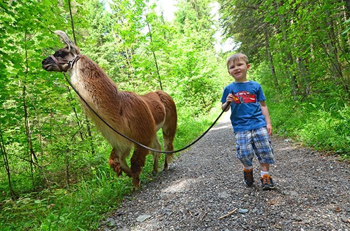 Lamatrekking Junge - Leon mit Lama im Gebirge