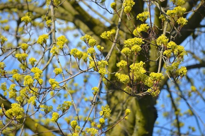 Frühjahrserwachen - Baum im März