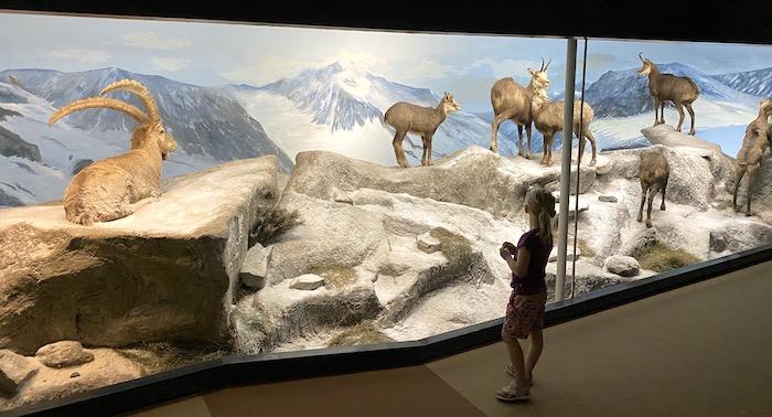 Naturkundemuseum Holterberg