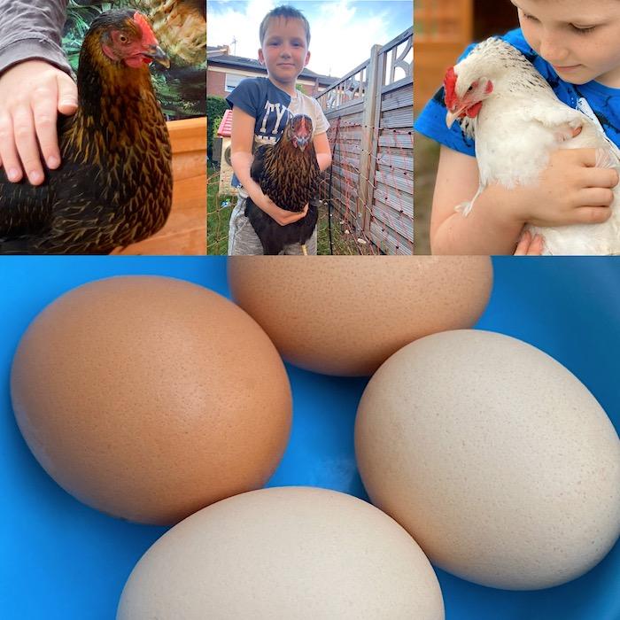 Eier von eigenen Hühnern