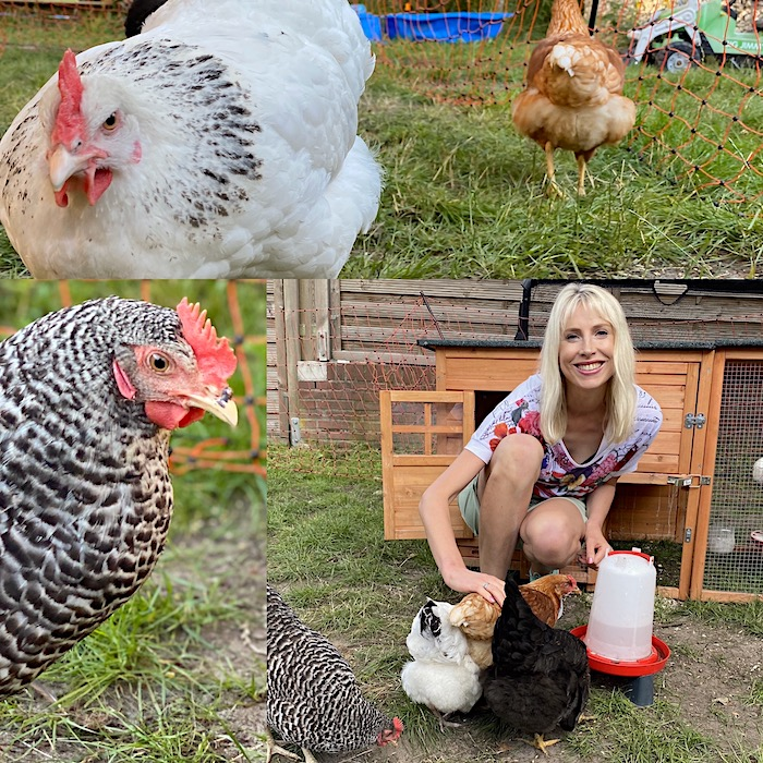 eigene Hühner - Tipps