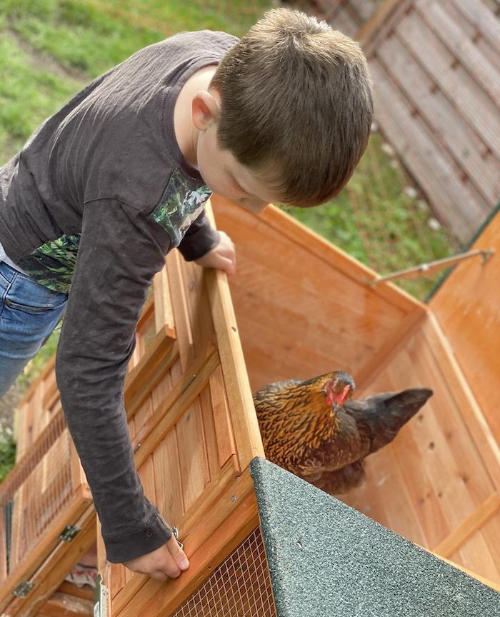 Kinder helfen bei der Hühner-Haltung