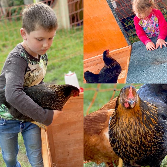 Hühner für Kinder
