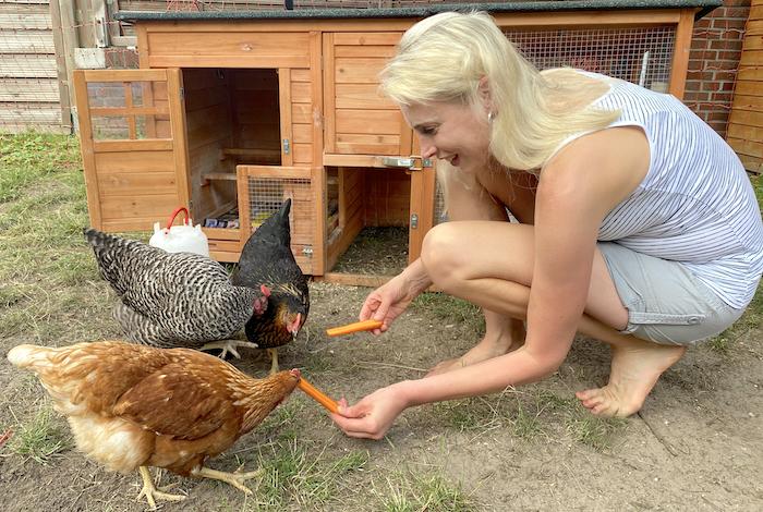 wo kann ich Hühner mieten
