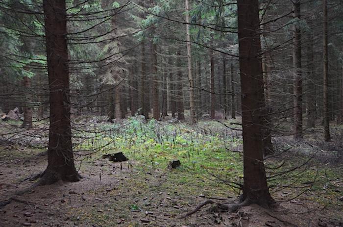 Wald im Ost-Erzgebirge
