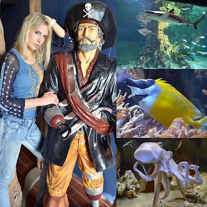 Aquarium Wilhelmshaven - Collage