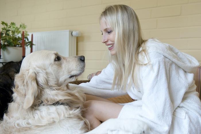 Golden Retriever als Haustier - Elischeba Wilde