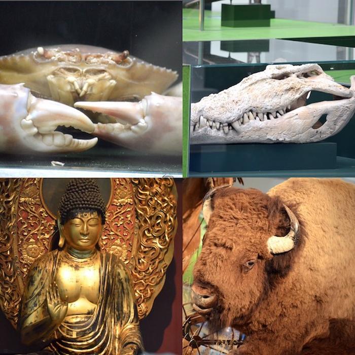 Übersee-Museum Bremen - Asien Afrika Amerika - Collage