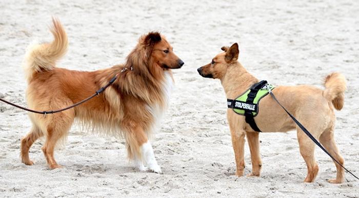 Hunde Blog - zwei Hunde am Strand