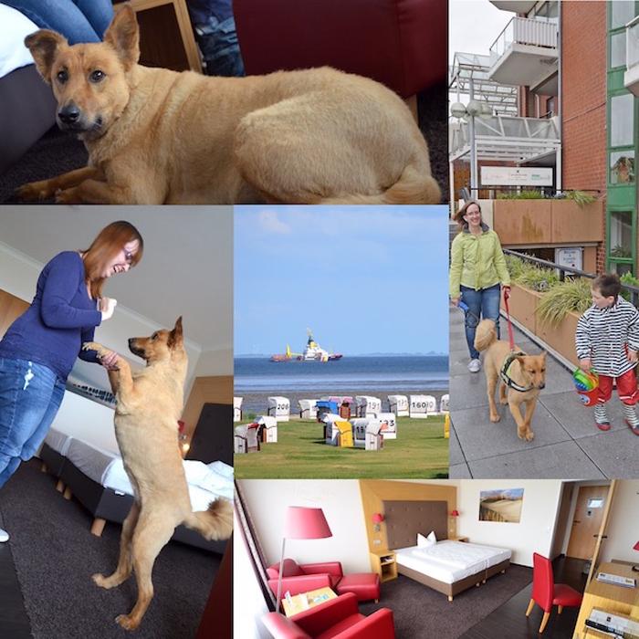 Urlaub mit Hund - Collage