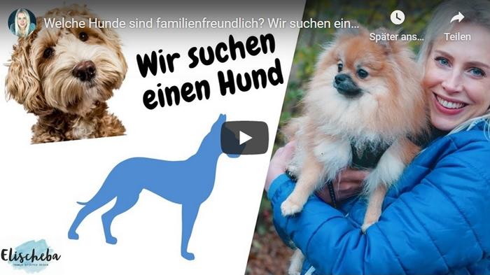 ElischebaTV_352 Wir suchen einen Hund