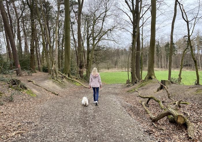 Wald-Tipps NRW mit Hund