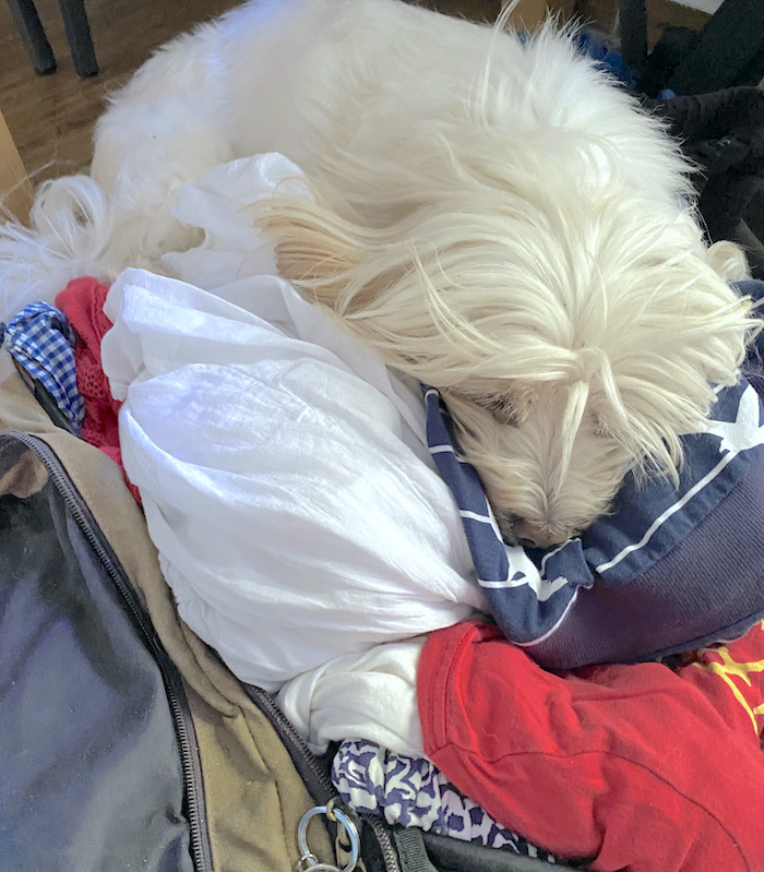 schlafender Hund auf Reisetasche