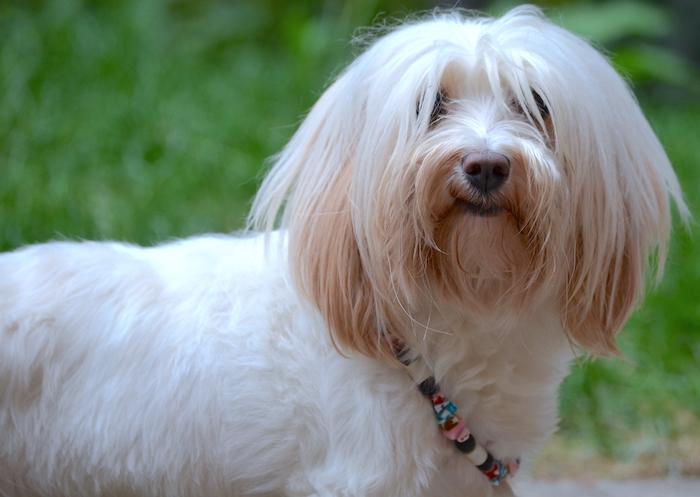 Keramikhalsband für den Hund